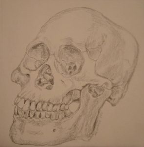 Bone study (skull), pencil, Mary Warner, December 2014.