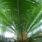 Palm leaf, Como Park Conservatory, Mary Warner, 2009.