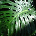 Leaf, Como Park Conservatory, Mary Warner, 2009.