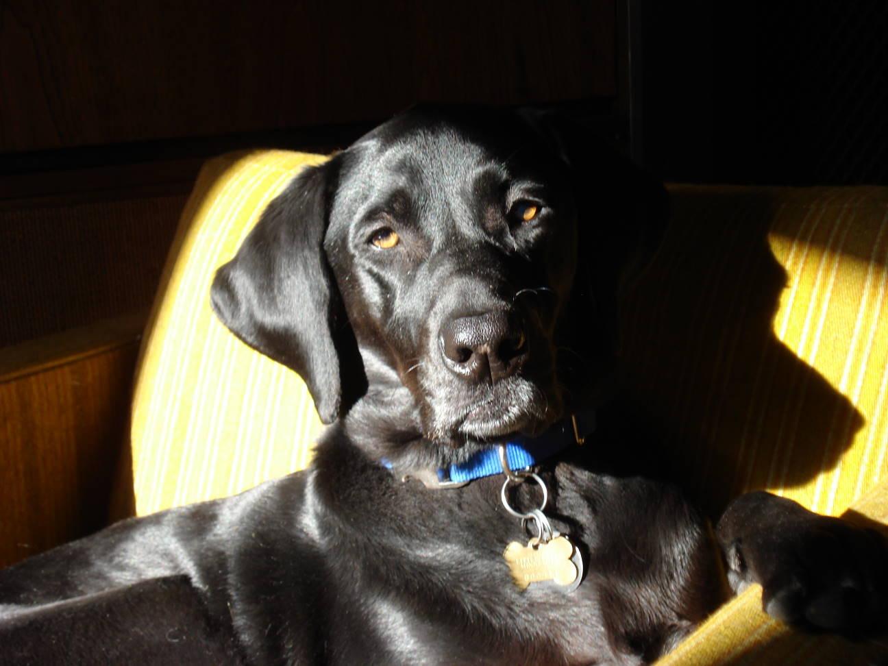 Shiny Puppy