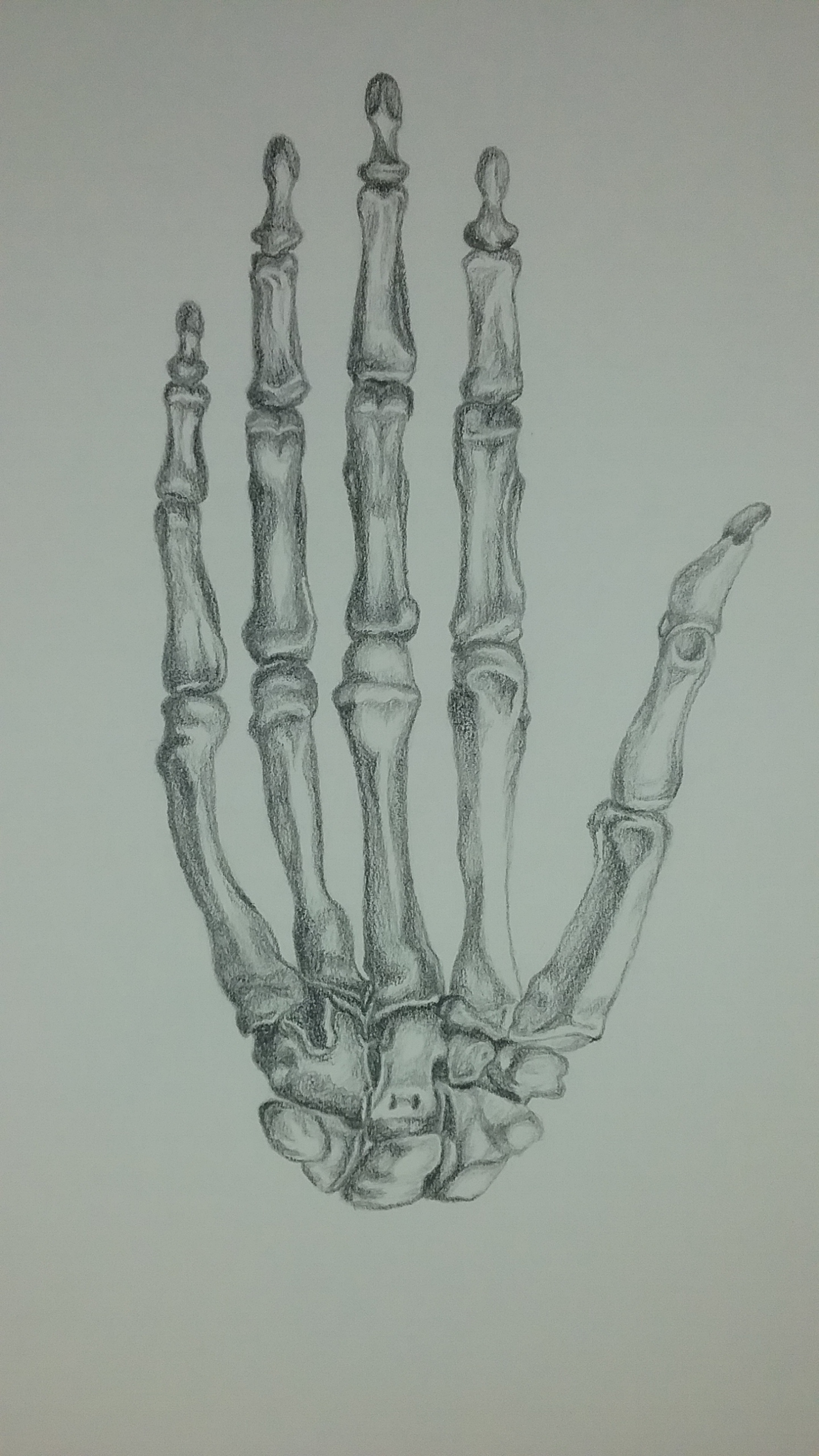 Skeletal hand by Mary Warner.