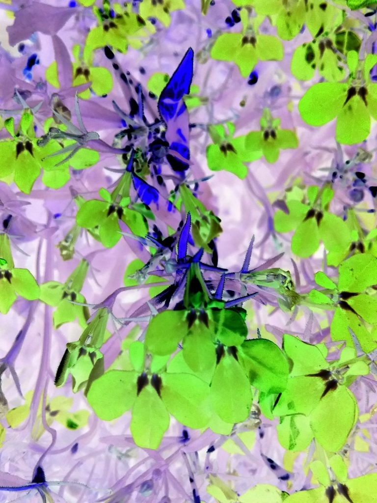 Vivid green flowers, Mary Warner, 2018.