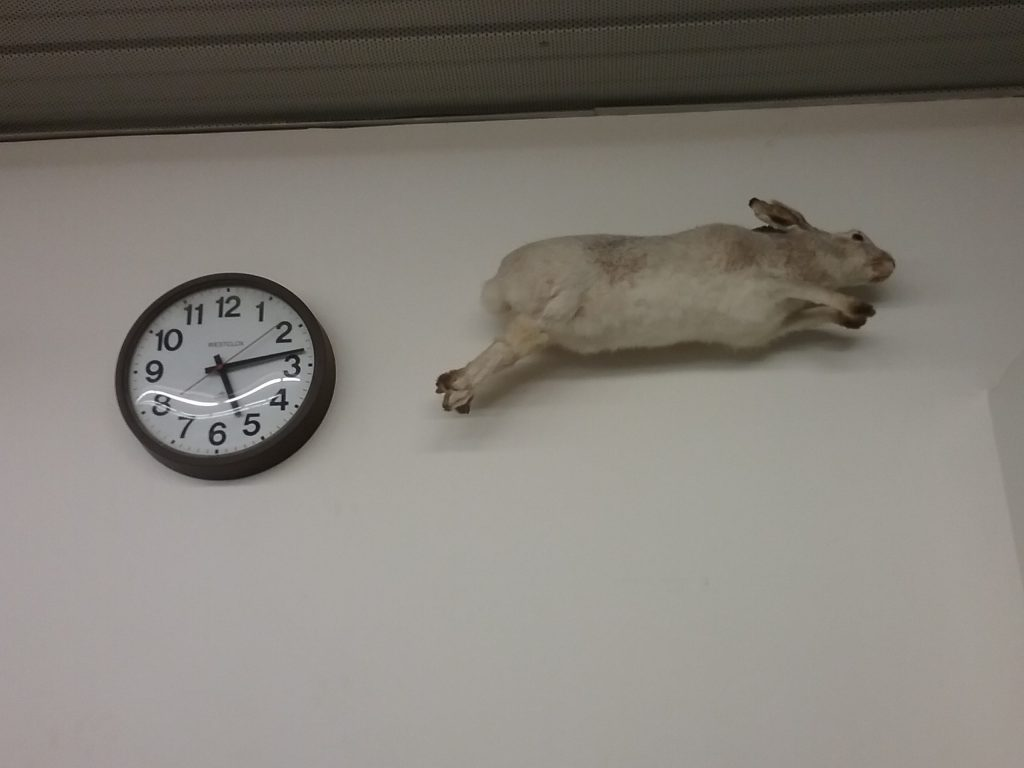 Clock & taxidermy rabbit at Dave Miller Auction House, St. Cloud, MN, 2018. (Finally, a post appropriate to this photo!)